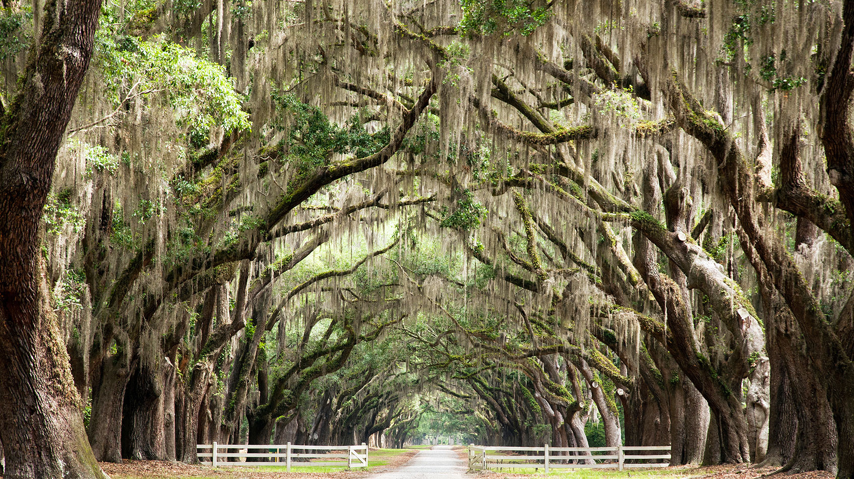 Spanish Moss Oaks, Where to Visit in April, Georgia