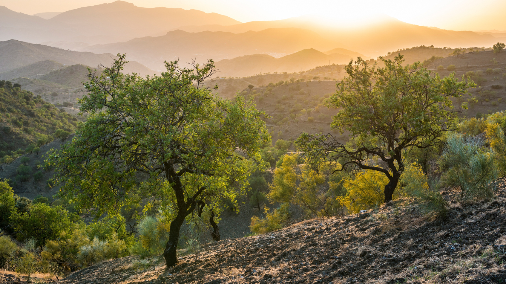 Andalusia-sunset-with-olive-tree-©-Joel-Carillet_iStock_http___www.istockphoto.com_photo_andalusian-landscape-at-sunset-with-olive-trees-in-spain-43670298