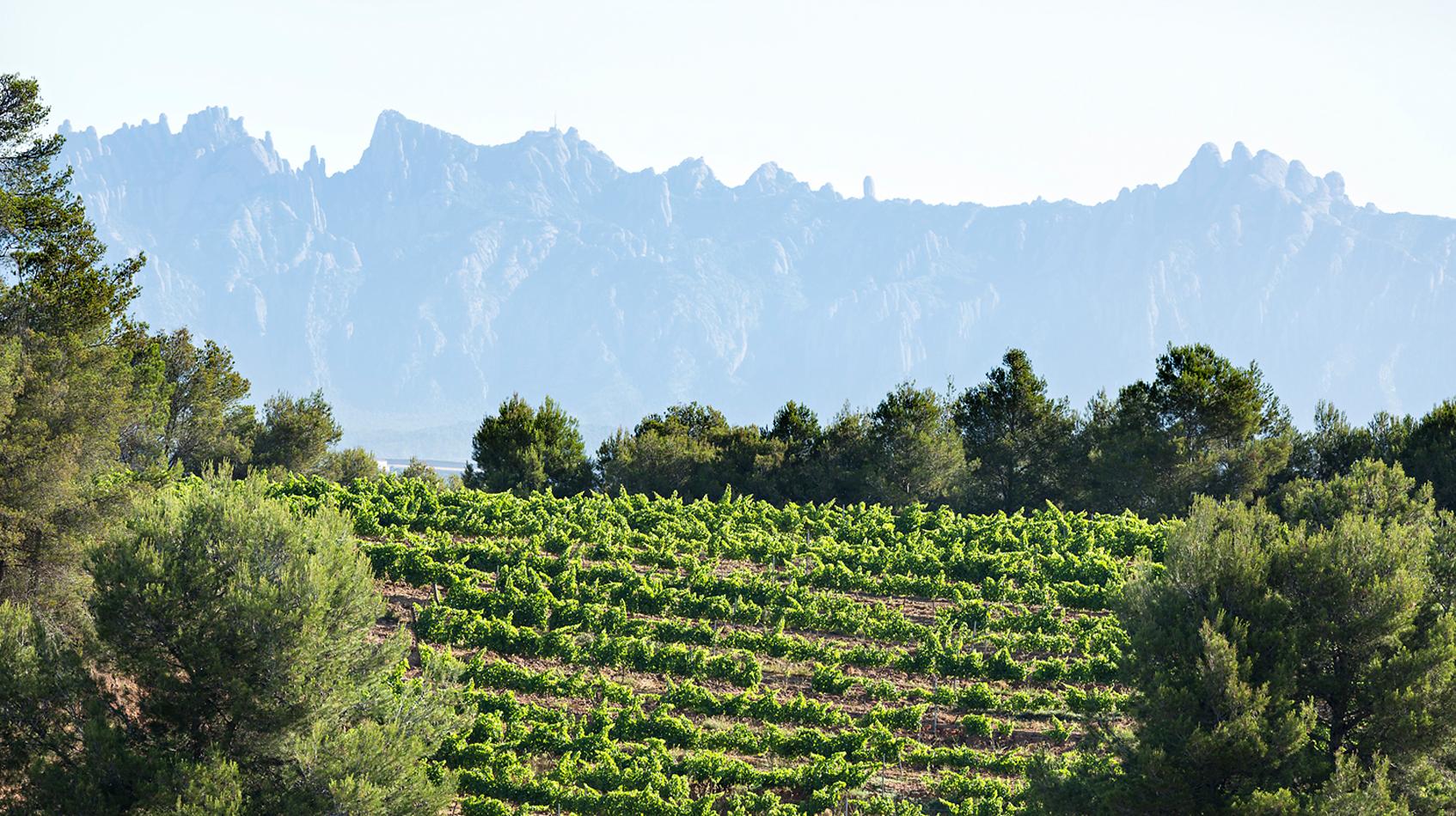 vinya-i-Montserrat