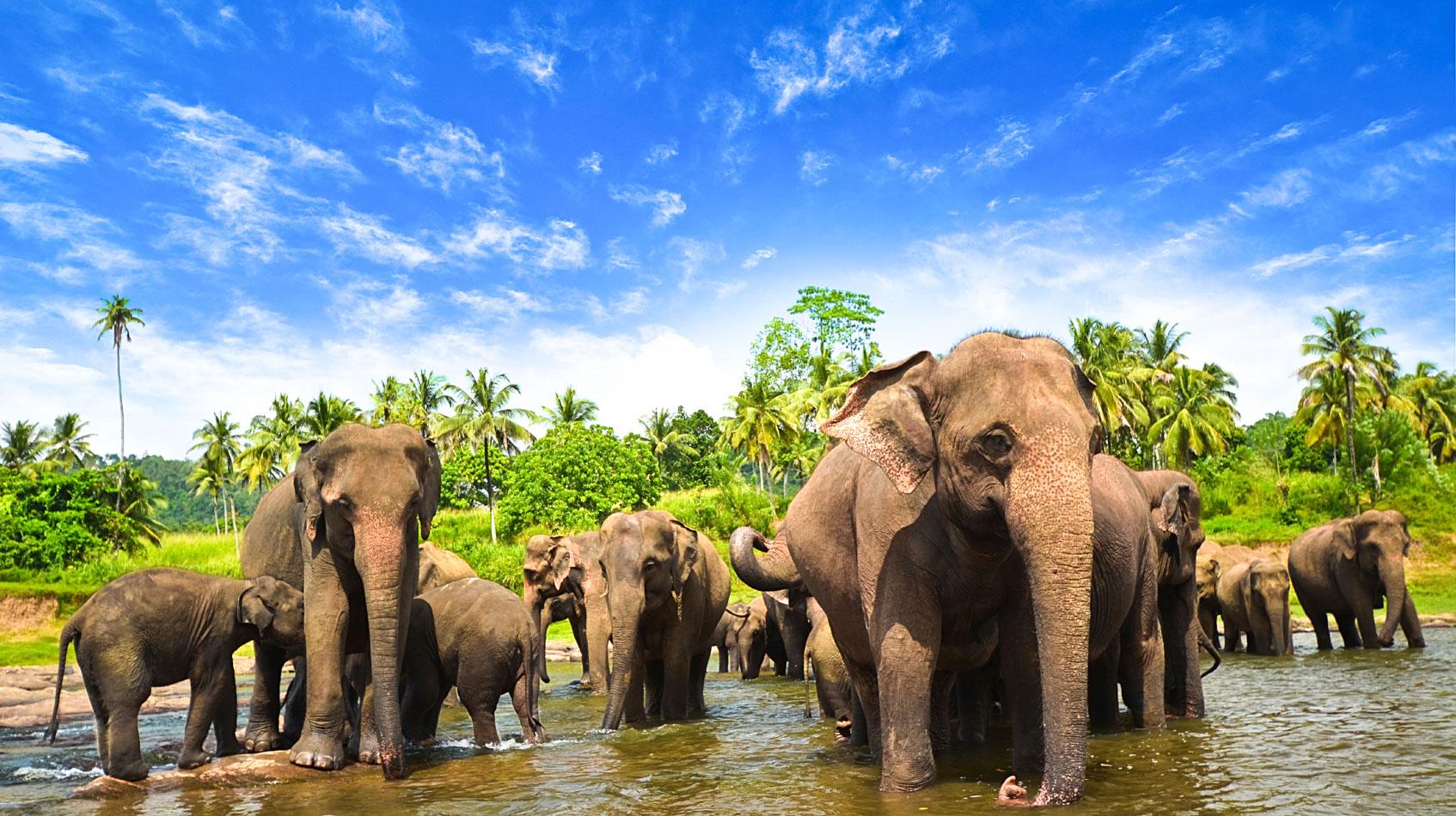 Sri-Lanka-Elephants-©-Surangaw---iStock