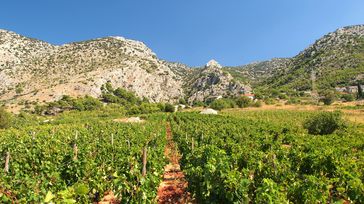 Croatia-Vineyard-iStock-Goran-Stimac-www.istockphoto