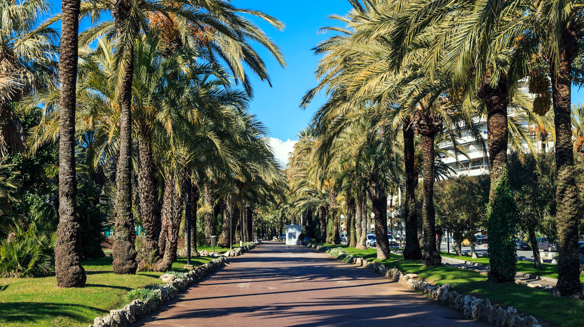 Palm-trees-on-the-Croisette-in-Cannes-iStock-elementals-www.istockphoto