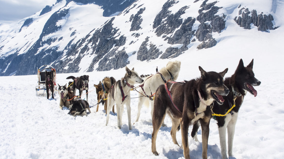 Mushing in Alaska