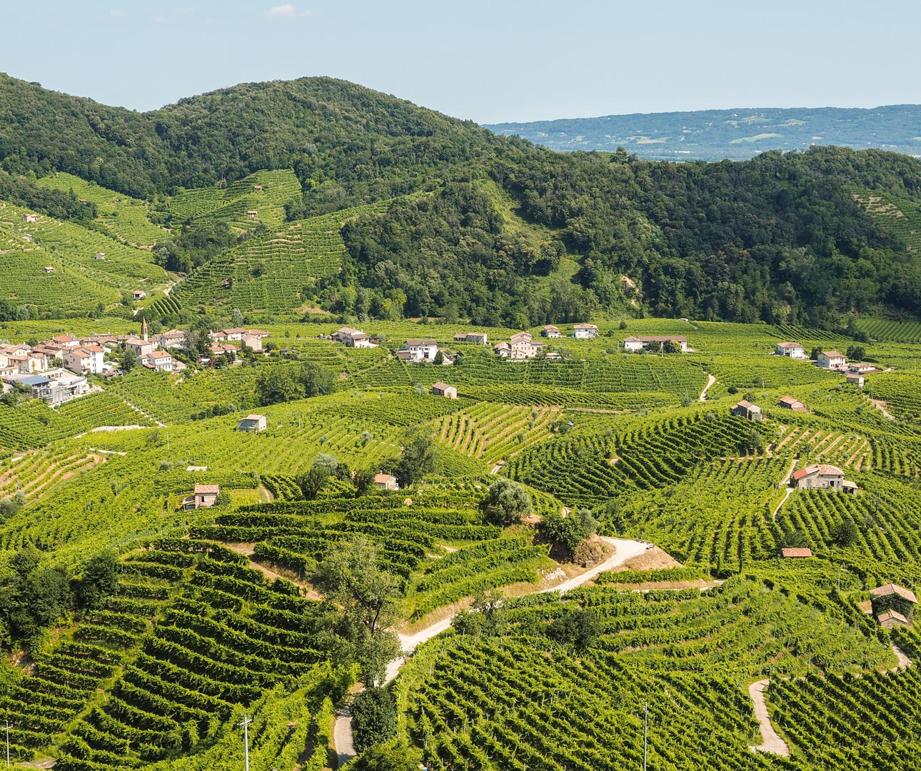 Vineyards in Valdobbiandene